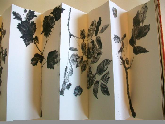 Plantand stonestudies14 Messen